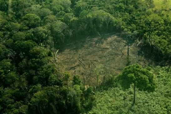 À peine investi, Bolsonaro lance l'offensive sur l'Amazonie