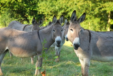 Sauvons les 6 ânes/ Save the donkeys /Давайте спасем 6 осликов!